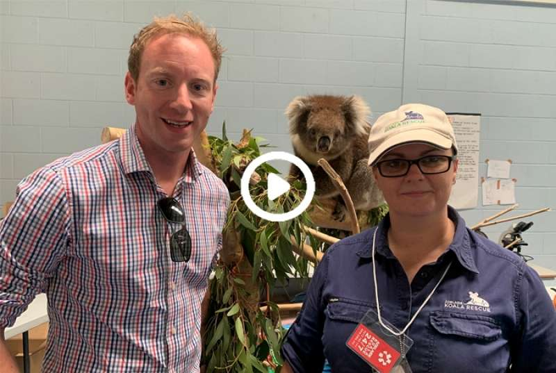 Bushfire recovery - wildlife rescue centres doing incredible work