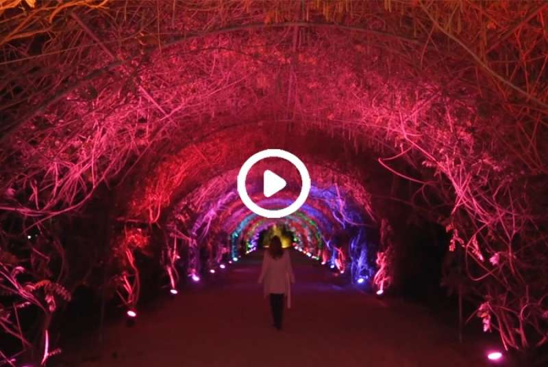 Launching Botanica Lumina
