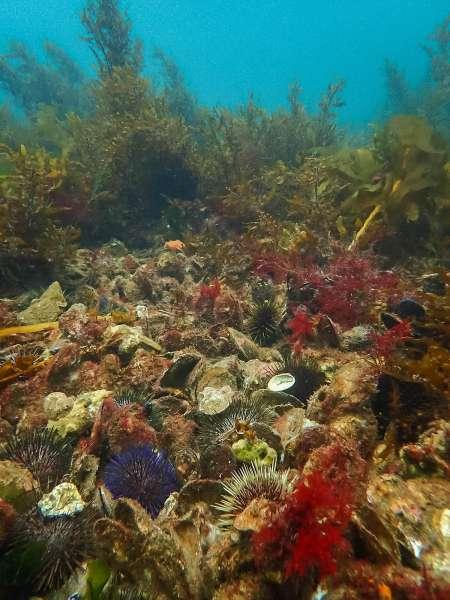 Construction complete on new Glenelg shellfish reef