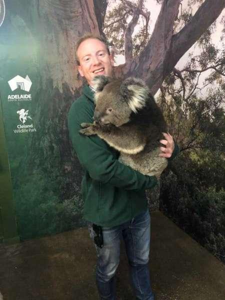 South Australians to once again embrace koala bear hugs