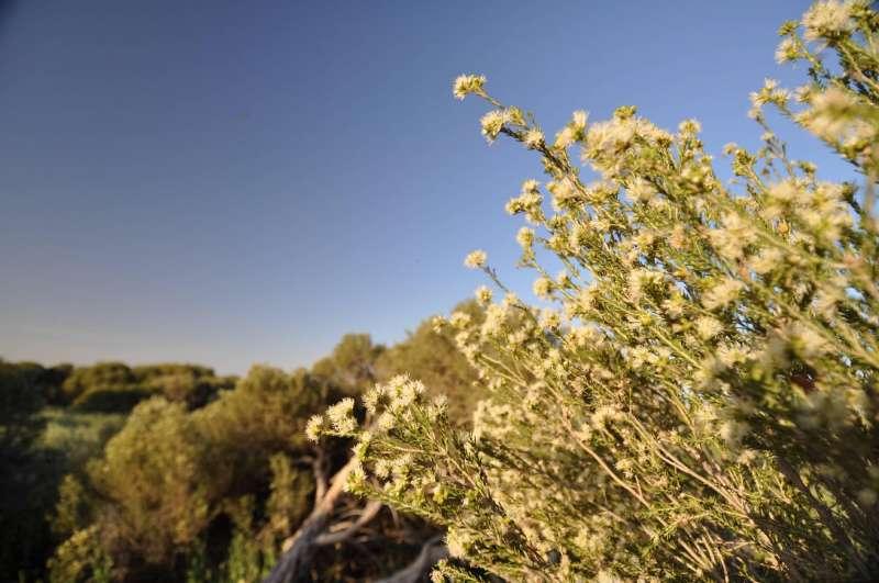 Native vegetation conservation gets a big boost
