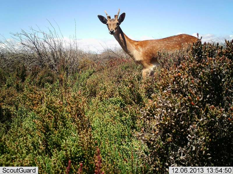 Overabundant and Pest Species Report