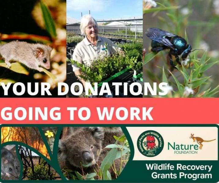 Wildlife recovery gets a helping hand