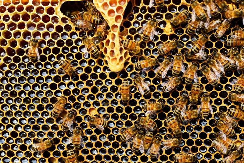 Beekeepers buzzing at Mount Bold opportunity