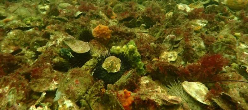 Help select the location of South Australia's next shellfish reef